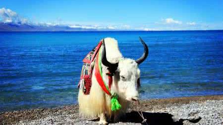 逸游西藏-拉萨、布达拉宫、大昭寺、扎基寺、林芝、苯日景区、雅鲁藏布江大峡谷、 巴松措、鲁朗林海、羊卓雍措、纳木错卧飞 10 日