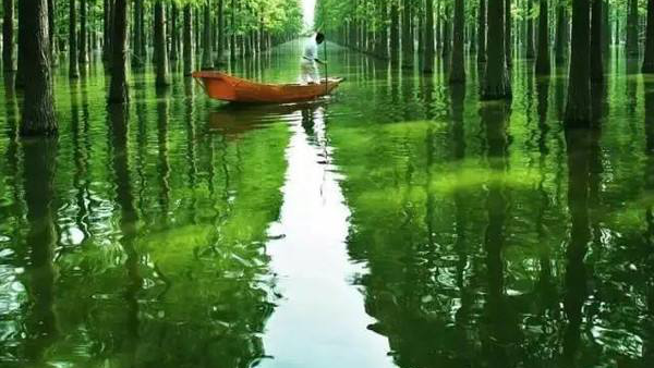 【跟团游麻城】古孝感乡/花朝河湾/涨渡湖湿地休闲两日游